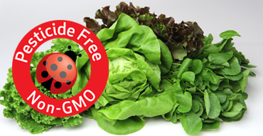Pesticide Free and Non GMO Produce